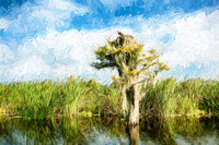 Florida Osprey Painting